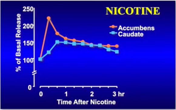 libération d'un pic de dopamine en lien avec la cigarette