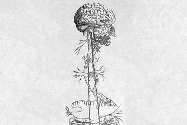La théorie polyvagale et l'hypnose