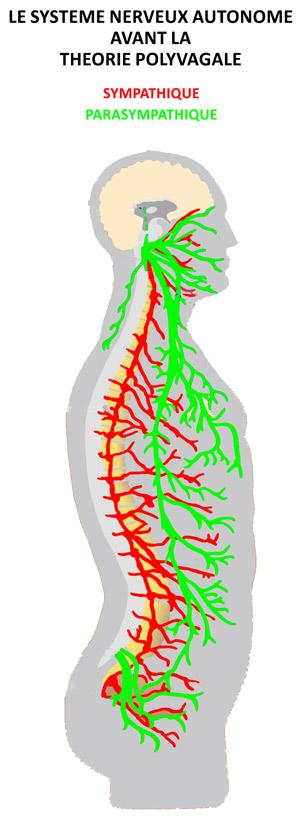 système nerveux sympathique et parasympathique